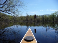 paddling toward a wood duck house in the flooded marsh